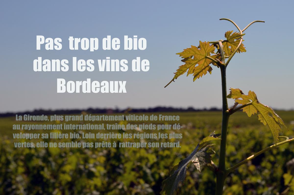 VIN_BIO_DE_BORDEAUX2